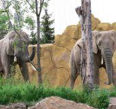 Dvur Kralove zoologijos sodas