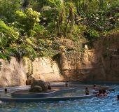 Tropikų salų vandens parkas
