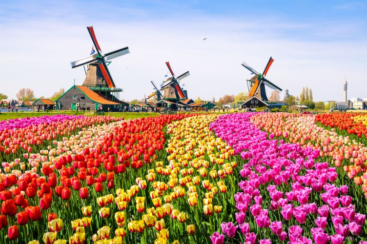 svorio nederlanduose