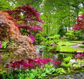 Japoniškas sodas Hagoje