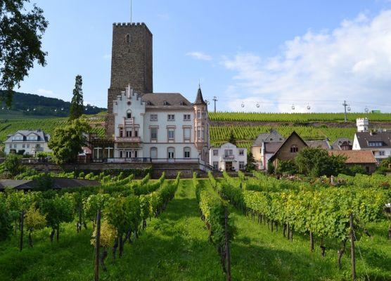 Rudesheimo vynuogynai