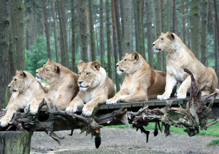 Serengečio parkas